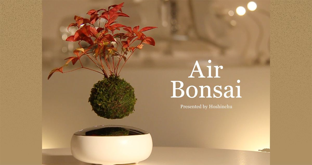 Floating Bonsai trees!!